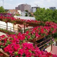 красивые цветы в интерьере балкона на этажерках пример картинка