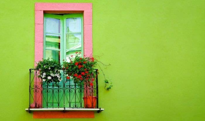 пытались картинки окна с растениями больше