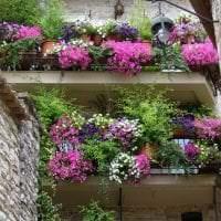 красивые цветы на балконе на полках пример фото