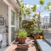 красивые цветы на балконе на полках пример картинка