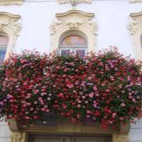 яркие цветы на балконе на полках интерьер фото