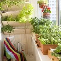 красивые цветы на балконе на полках дизайн картинка