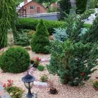 большие низкорослые хвойные растения в ландшафтном дизайне дачного участка фото