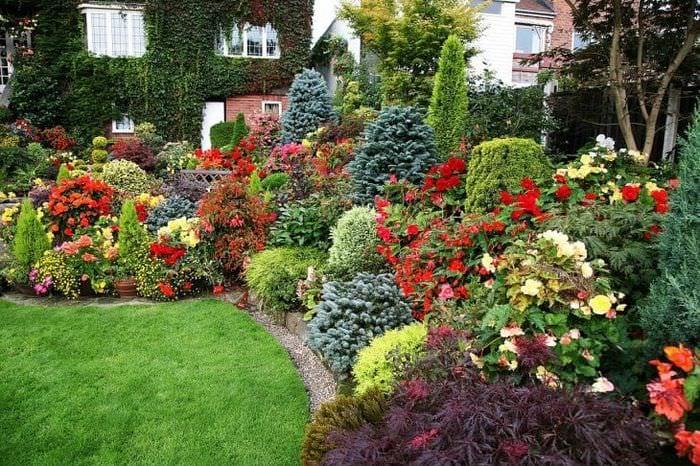 Все растения для ландшафтного дизайна в картинках