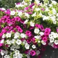 шикарные цветы на балконе на перемычках дизайн картинка