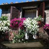 красивые цветы в интерьере балкона на этажерках пример фото