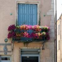 яркие цветы в интерьере балкона на этажерках дизайн картинка