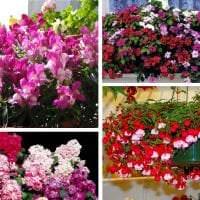 яркие цветы в интерьере балкона на перемычках пример картинка