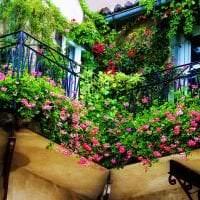 красивые цветы на балконе на этажерках дизайн картинка
