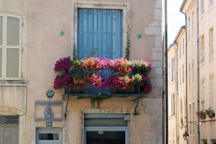 шикарные цветы на балконе на этажерках дизайн
