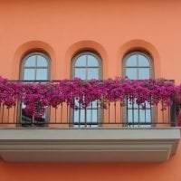 шикарные цветы на балконе на полках дизайн фото