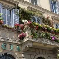 яркие цветы на балконе на этажерках пример картинка