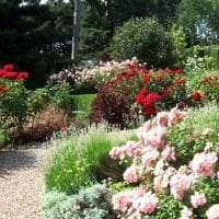 шикарный ландшафтный дизайн дачного участка в английском стиле с цветами фото