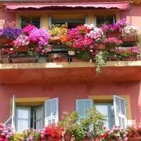 шикарные цветы на балконе на перемычках пример картинка