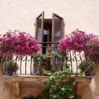 яркие цветы на балконе на полках дизайн фото