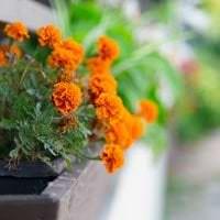 красивые цветы в интерьере балкона на этажерках интерьер картинка
