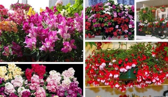 яркие цветы в интерьере балкона на этажерках интерьер