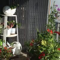 шикарные цветы в интерьере балкона на полках пример фото
