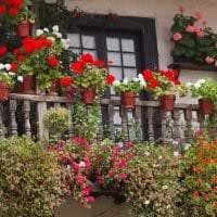 красивые цветы в интерьере балкона на перемычках интерьер фото