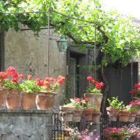 яркие цветы в интерьере балкона на перемычках интерьер фото