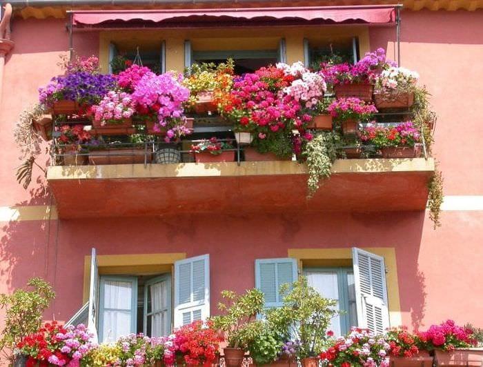 шикарные цветы в интерьере балкона на этажерках дизайн