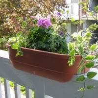 шикарные цветы на балконе на полках пример фото