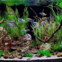 идея необычного украшения домашнего аквариума картинка