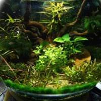вариант яркого оформления домашнего аквариума картинка