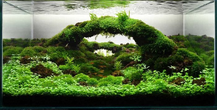 вариант яркого оформления аквариума