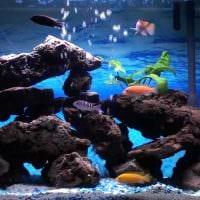 идея яркого декорирования аквариума картинка
