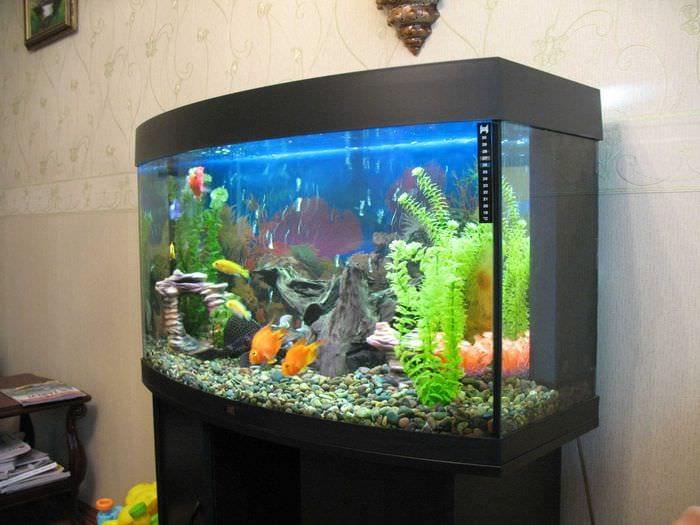 идея красивого украшения домашнего аквариума