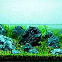 идея оригинального оформления домашнего аквариума фото