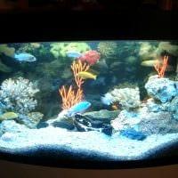 идея необычного украшения домашнего аквариума фото