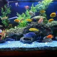 идея красивого декорирования домашнего аквариума фото