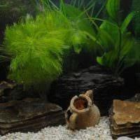 вариант необычного оформления аквариума фото