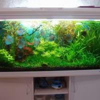 вариант красивого декорирования домашнего аквариума картинка