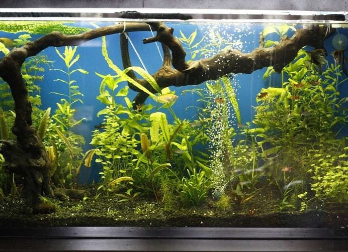 идея красивого декорирования аквариума