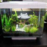 идея красивого декорирования аквариума фото