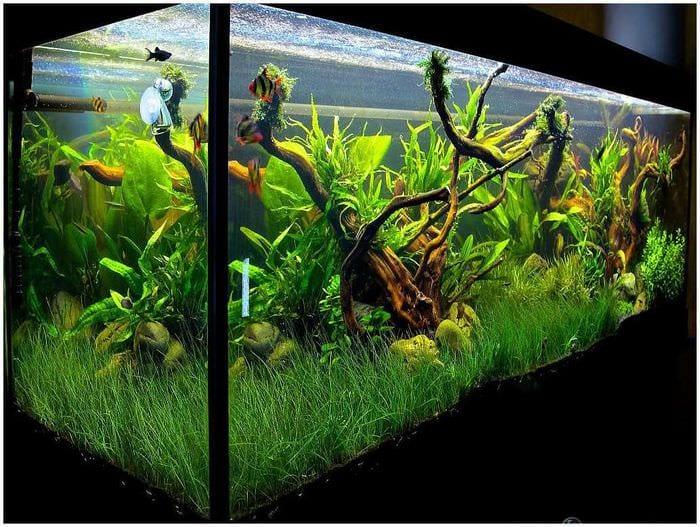 вариант необычного украшения аквариума