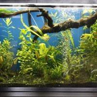 идея яркого оформления аквариума фото