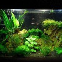 идея необычного декорирования домашнего аквариума картинка