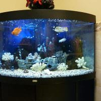 идея яркого оформления домашнего аквариума фото
