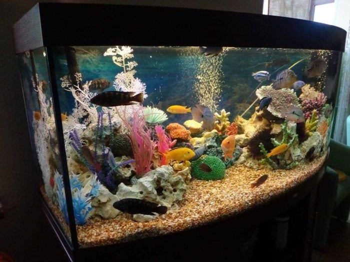 идея оригинального украшения аквариума