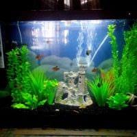 идея красивого украшения аквариума фото