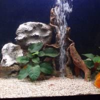 вариант необычного декорирования домашнего аквариума картинка