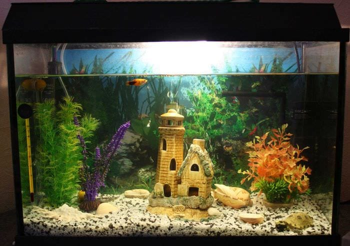 вариант необычного декорирования домашнего аквариума
