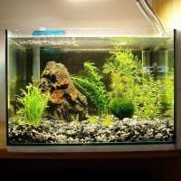 вариант необычного декорирования аквариума картинка