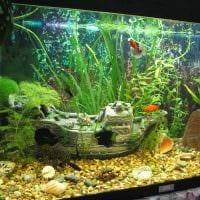 идея красивого украшения домашнего аквариума фото