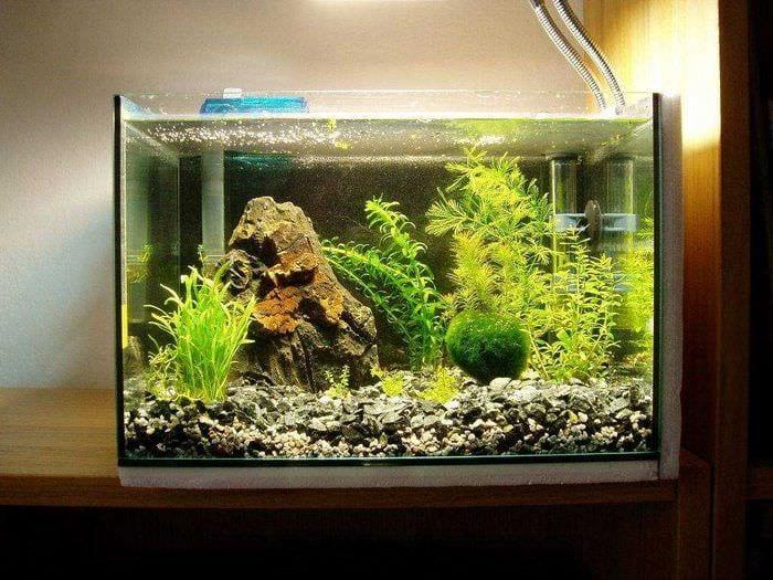 вариант красивого оформления аквариума