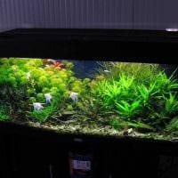 идея красивого декорирования аквариума картинка